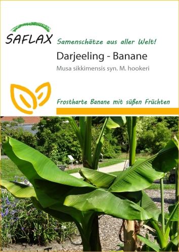 Darjeeling Banane (5 Korn)