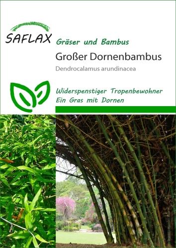 Dendrocalamus Arundinacea Grosser Dornen Bambus Anleitungen