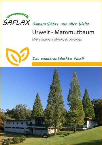 Urwelt - Mammutbaum (60 Korn)