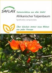 Afrikanischer Tulpenbaum (30 Korn)