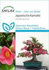 Camelie - Camelia japonica (4 Korn)