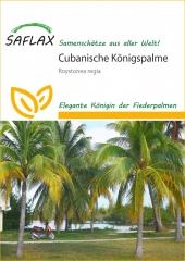 Cubanische Königspalme (8 Korn)