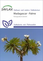 Madagascar-Palme (10 Korn)
