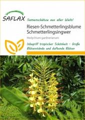 Riesen-Schmetterlingsblume (10 Korn)