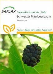 Schwarzer Maulbeerbaum (200 Korn)