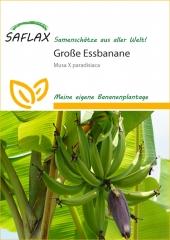 Große Essbanane (10 Korn)