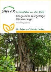 Bengalische Würgefeige (20 Korn)