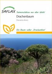 Drachenbaum - Dracaena draco (5 Korn)