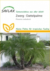 Zwerg - Dattelpalme (25 Korn)