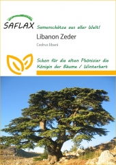 Libanon - Zeder (20 Korn)