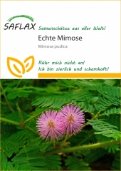 Echte Mimose - Mimosa pudica (70 Korn)