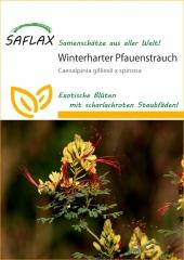 Winterharter Pfauenstrauch (15 Korn)