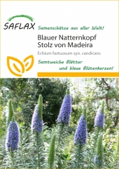 Blauer Natternkopf (100 Korn)