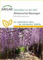 Afrikanischer Blauregen (10 Korn)