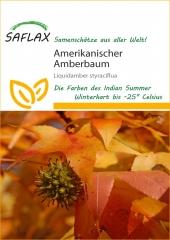 Amerikanischer Amberbaum (100 Korn)
