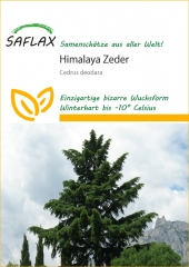Himalaya - Zeder (35 Korn)