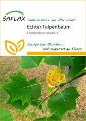 Tulpenbaum (20 Korn)
