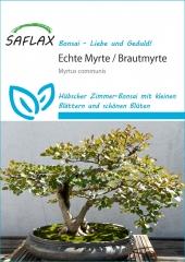 Echte Myrte - Myrtus communis (30 Korn)