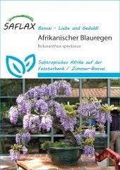 Afrikanischer Blauregen (15 Korn)