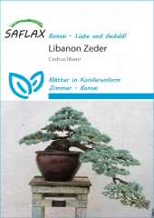 Libanon Zeder (20 Korn)