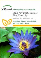Blaue Seerose (25 Korn)