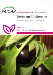 Eierbaum - Solanum melonga (20 Korn)