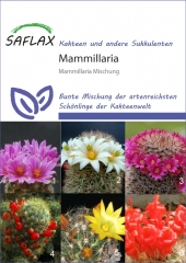 Mammillaria Mischung (40 Korn)