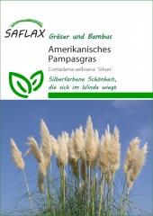 Amerikanisches Pampasgras (200 Korn)