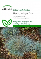 Blau-Schwingel Zwerggras (50 Korn)