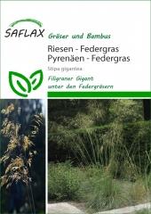 Riesen - Federgras (10 Korn)