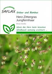 Herz - Zittergras (75 Korn)
