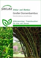 Großer Dornenbambus (50 Korn)