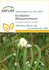 Eucalyptus bicostata (100 Korn)