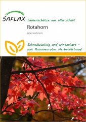 Rotahorn (20 Korn)