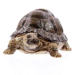 Schildkröte mit braunem Panzer