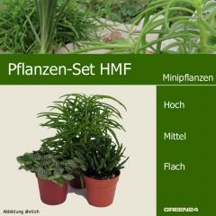 Mini-Pflanzen Set HMF 3 Pflanzen
