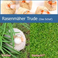 Rasenmäher und Pflegehilfe Trude