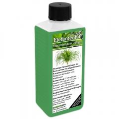 Beaucarnea (Ponytail Palm, Elephants Foot Tree) Liquid Fertilizer 250ml