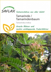 Tamarinde Indischer Dattelbaum (4 Korn)