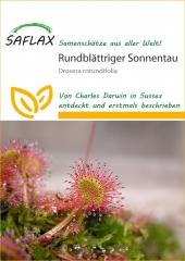 Rundblättriger Sonnentau (50 Korn)