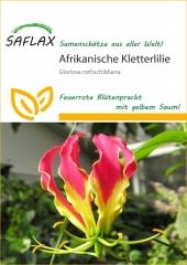 Afrikanische Kletterlilie (15 Korn)