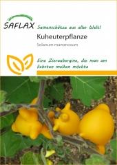 Kuheuterpflanze (10 Korn)