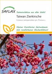 Taiwan - Zierkirsche (10 Korn)