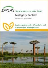 Malagasy Baobab (2 Korn)