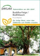 Buddha-Feige / Bodhi-Baum (100 Korn)