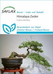 Himalaya Zeder (35 Korn)