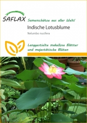 Indische Lotusblume (8 Korn)