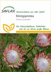 Königsprotea (5 Korn)