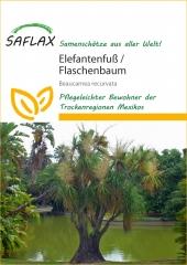Flaschenbaumlilie-Elefantenfuß(10 Korn)
