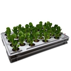 Aqua 36-A Pro Hydroponic Anzucht-System XL 40 x 60 cm, für Nutzpflanzen, Gemüse, Kräuter, Salate, Zierpflanzen in Tiefwasserkultur (DWC)